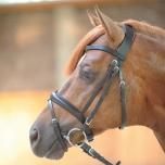 Fenia pehmest nahast valjad / must, pony