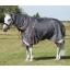 Buster-50---Grey---Main-Standing---Webx900.jpg