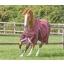SS21-Buster-Zero-Original-Burgundy-Running-72-RGB-zoom.jpg