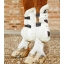 Techno-Wool-Tendon-Boot-White-1_dfb66348-be2f-42d3-8f40-155af326ad3d_768x.jpg